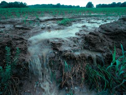 Image of water running off a farm field.